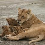 Careing Mom