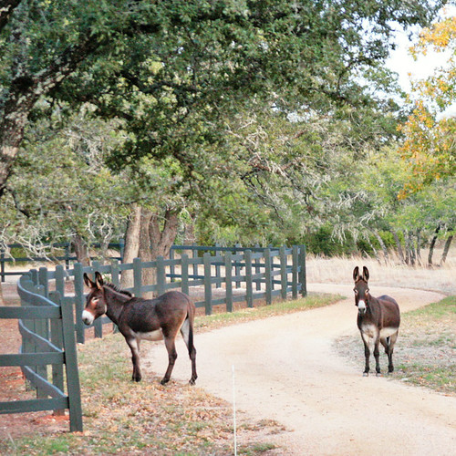 Three donkeys | by Jilroy Frosting Psmith