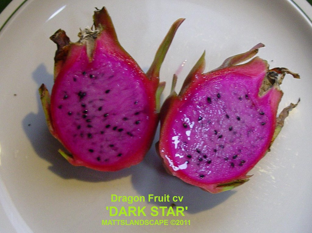 Image Result For How To Cut Up A Dragon Fruit