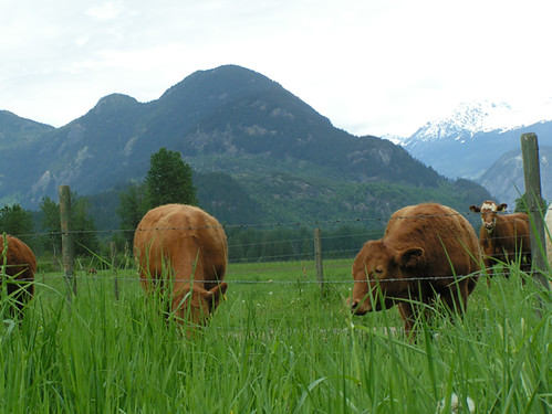 Two Rivers Specialty Meats | Pemberton Meadows Happy Cows | by scout.magazine