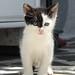 Naoussa Kitten