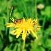 Hymenoptera, Coleoptera y Díptera