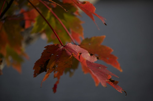 Fall 2011 | by HAWKES NS