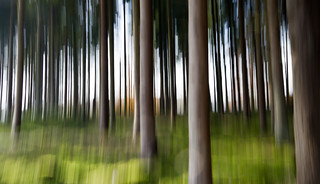 Simply Trees | by Jeanette Svensson