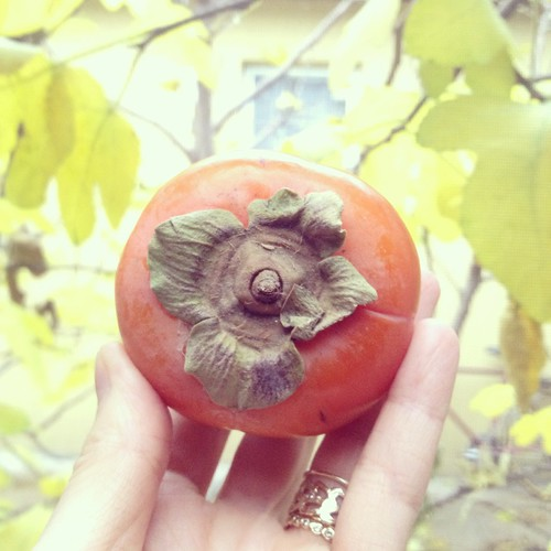 persimmon | by Odette NY