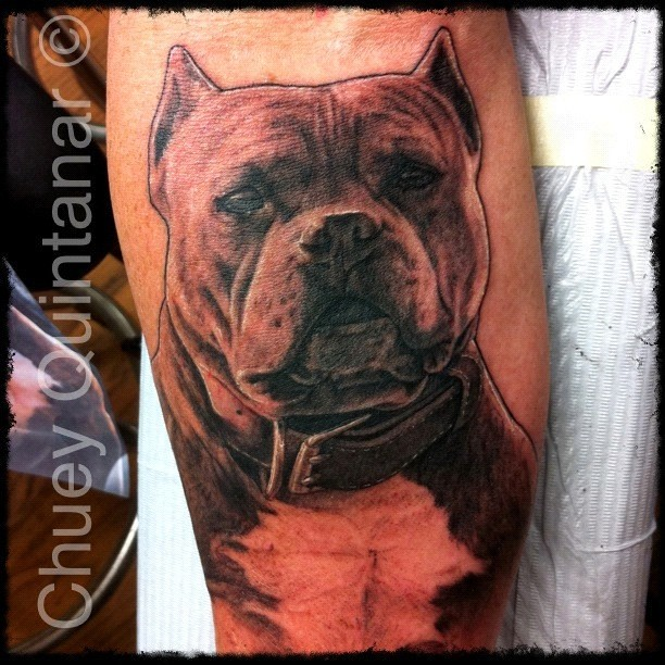 tattoo i did of lil ro the legendary bully dog on dave wi flickr. Black Bedroom Furniture Sets. Home Design Ideas