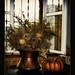 Halloween, is a time of pumpkins!!