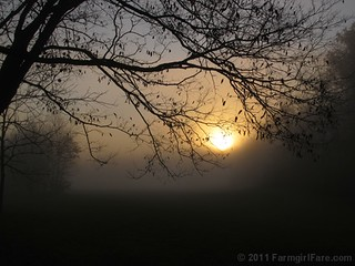 Spooky mist in the hollow | by Farmgirl Susan