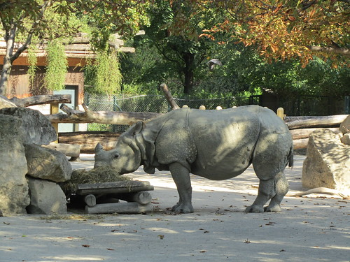 Indian Rhinoceros at Vienna Zoo | by David Jones