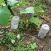 Homemade irrigation