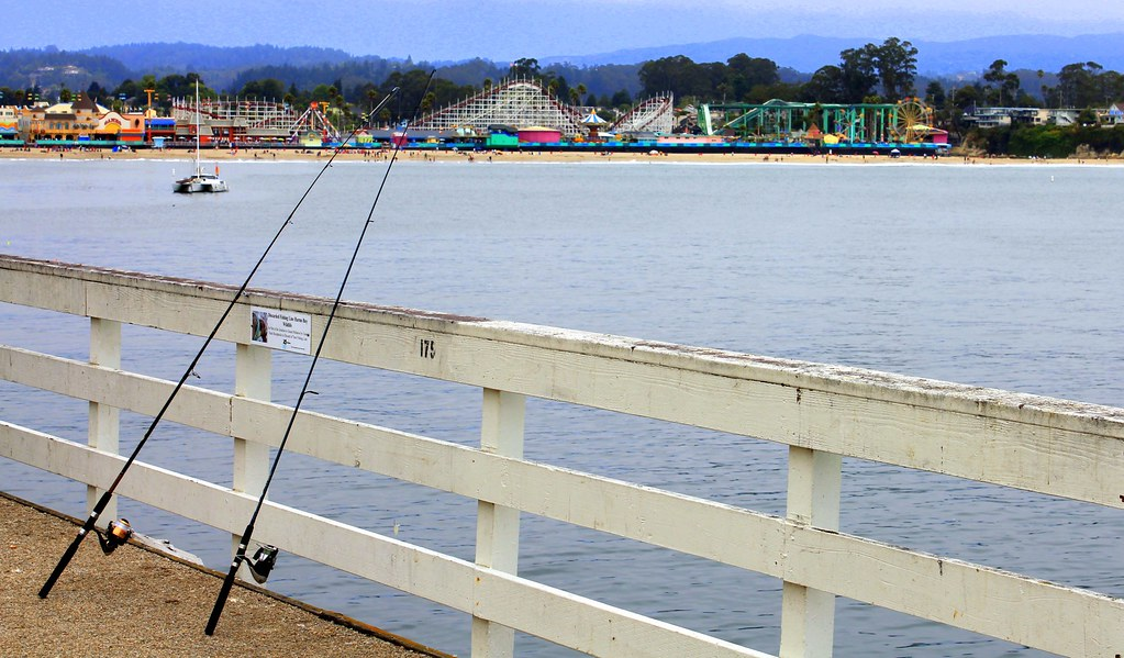 Fishing off the santa cruz pier star fish sand dabs for Fishing off a pier