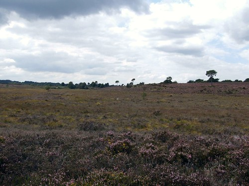 Holt Heath NNR | by eucera