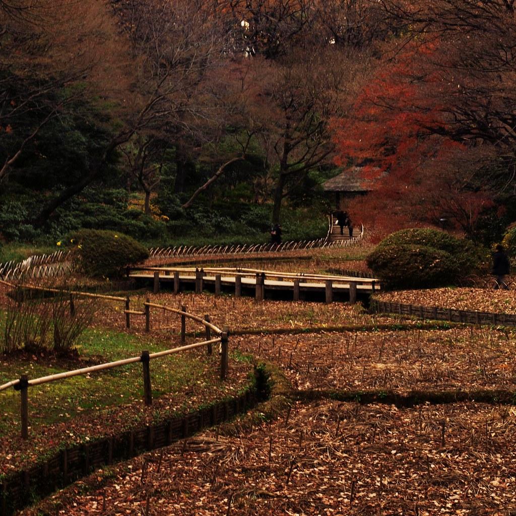 meiji shrine inner gardens in winter after visiting me u2026 flickr