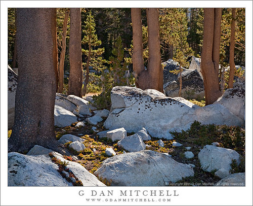 Boulders and Trees, Lower Young Lake | by G Dan Mitchell