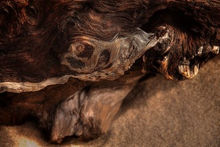 Driftwood | by PhotoAtelier