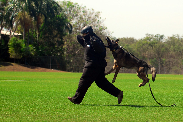 Image Result For Dog Training Suit
