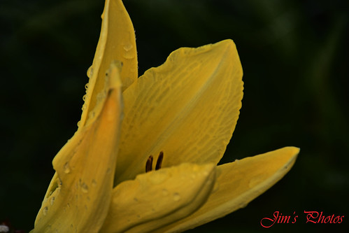 Yellow Flower | by Jims_photos
