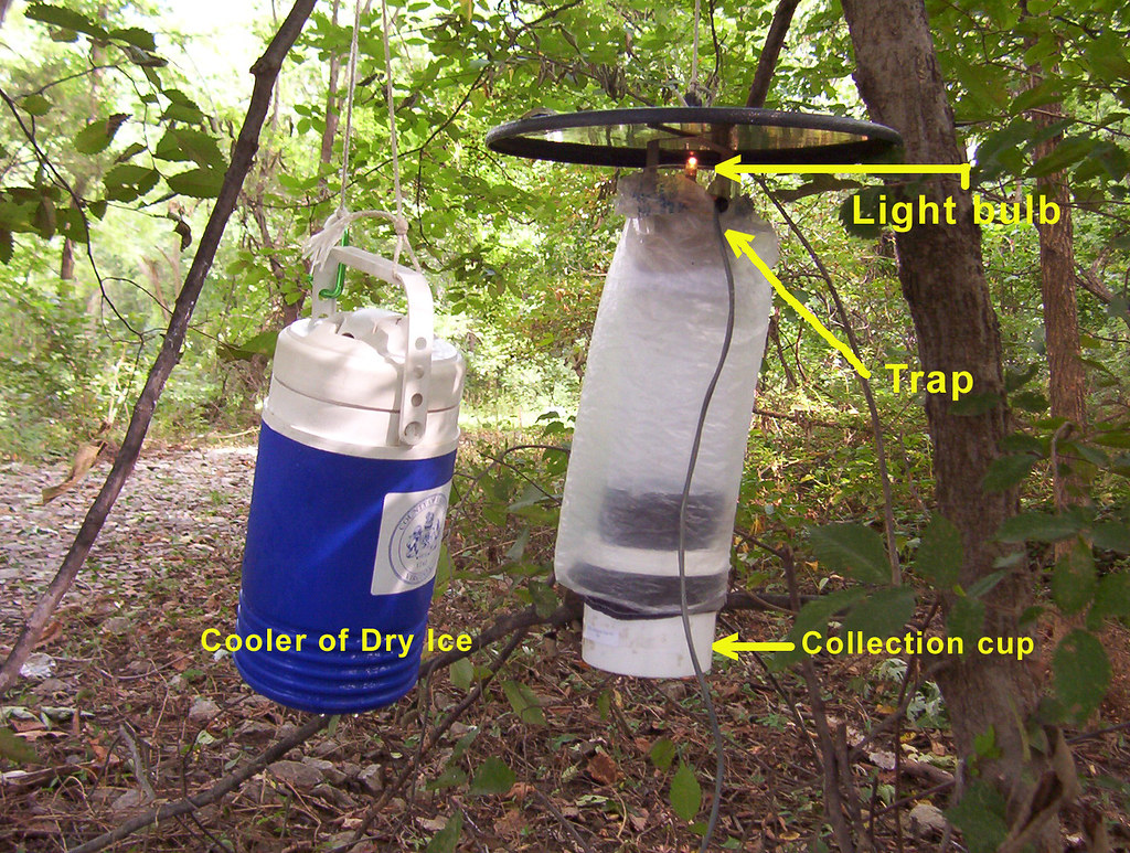 how to create holistic wasp trap