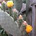 Webby Flowers