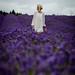 UKWP Lavender Shoot (144 of 217)