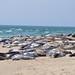 Seals at Nantucket National Wildlife Refuge