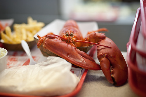 Lobster on a Tray | by goingslowly
