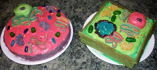 3d Cell Cakes For A Step By Step How To Guide To Create Flickr