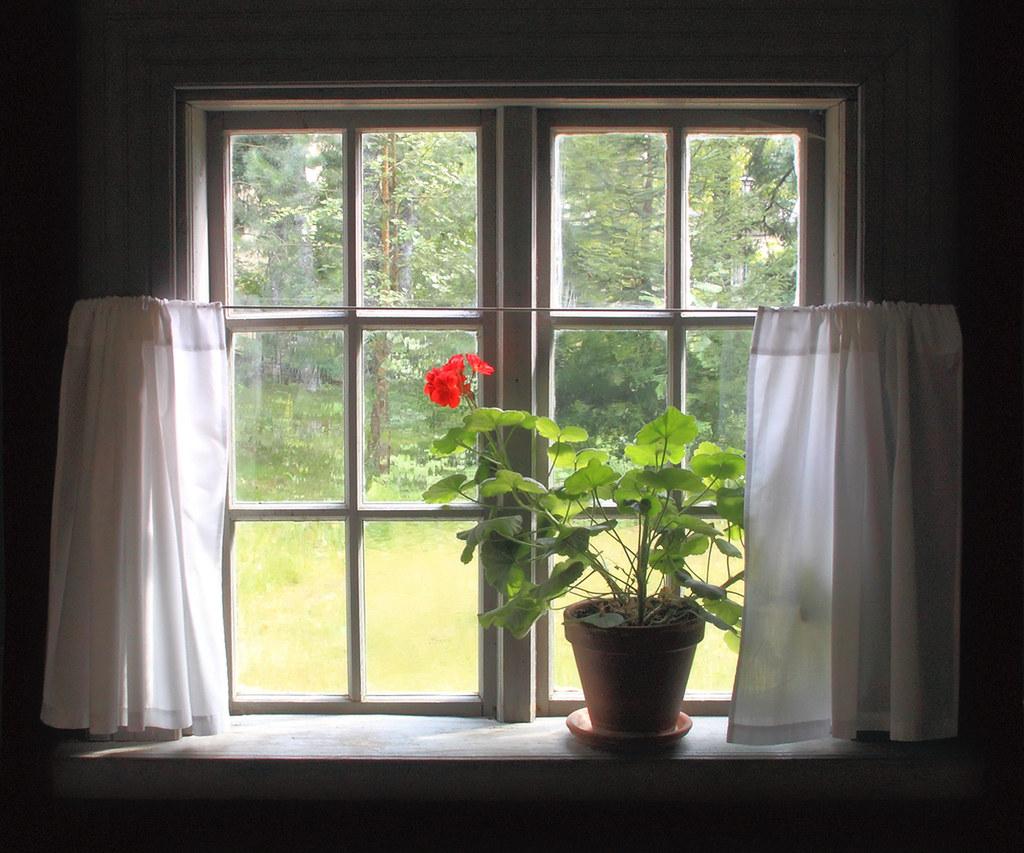 A Geranium On The Windowsill | By Raf.