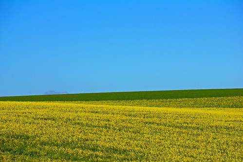 field of yellow & green | by WITHIN the FRAME Photography(5 Million views tha
