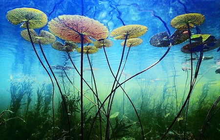 0720.06.ocean plants | Junior Wisdom | Flickr