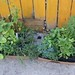 Soon-to-be-planted at our Gardening Party