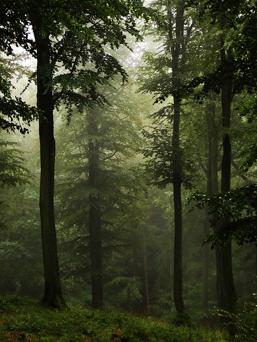 High Forest... in the rain | by JoannaRB2009