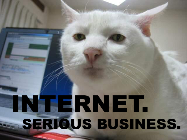 Serious Business Cat Internet-serious-business