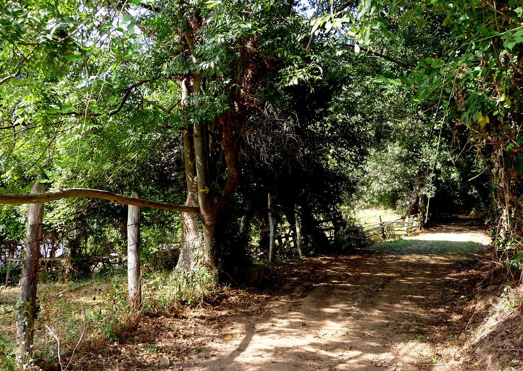 Camino hacia Santa Cristina de Lena