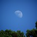 the Moon in the daylight