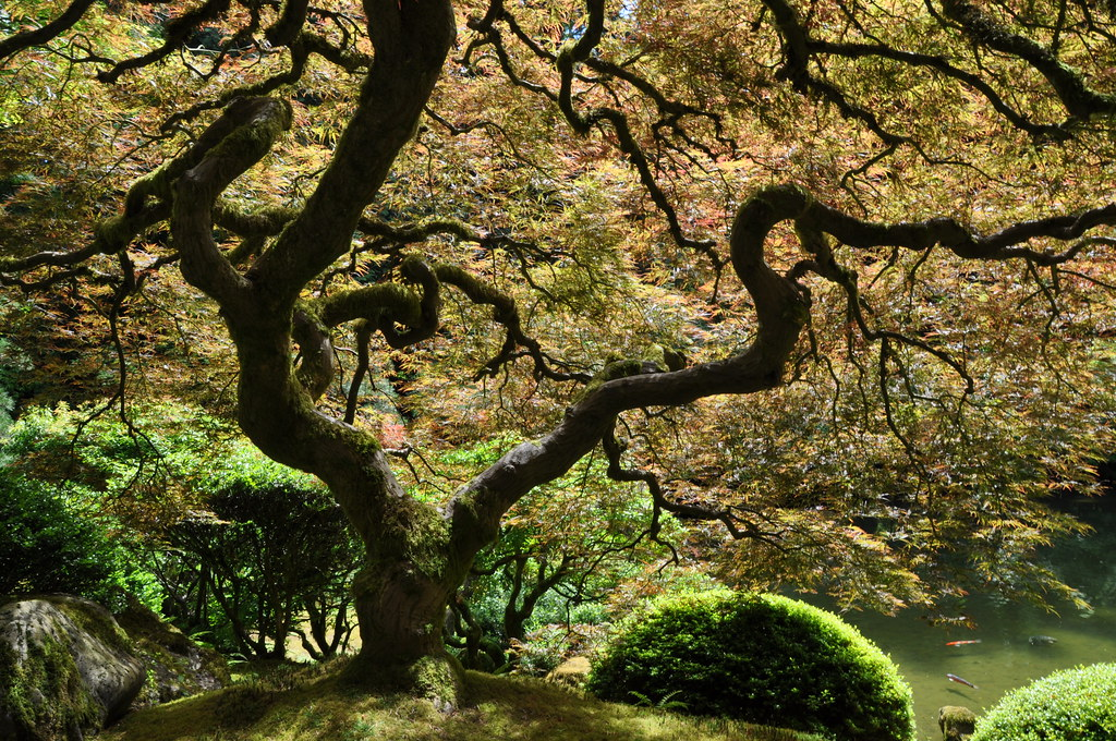 The most beautiful tree in the world japanese garden for Most beautiful garden trees