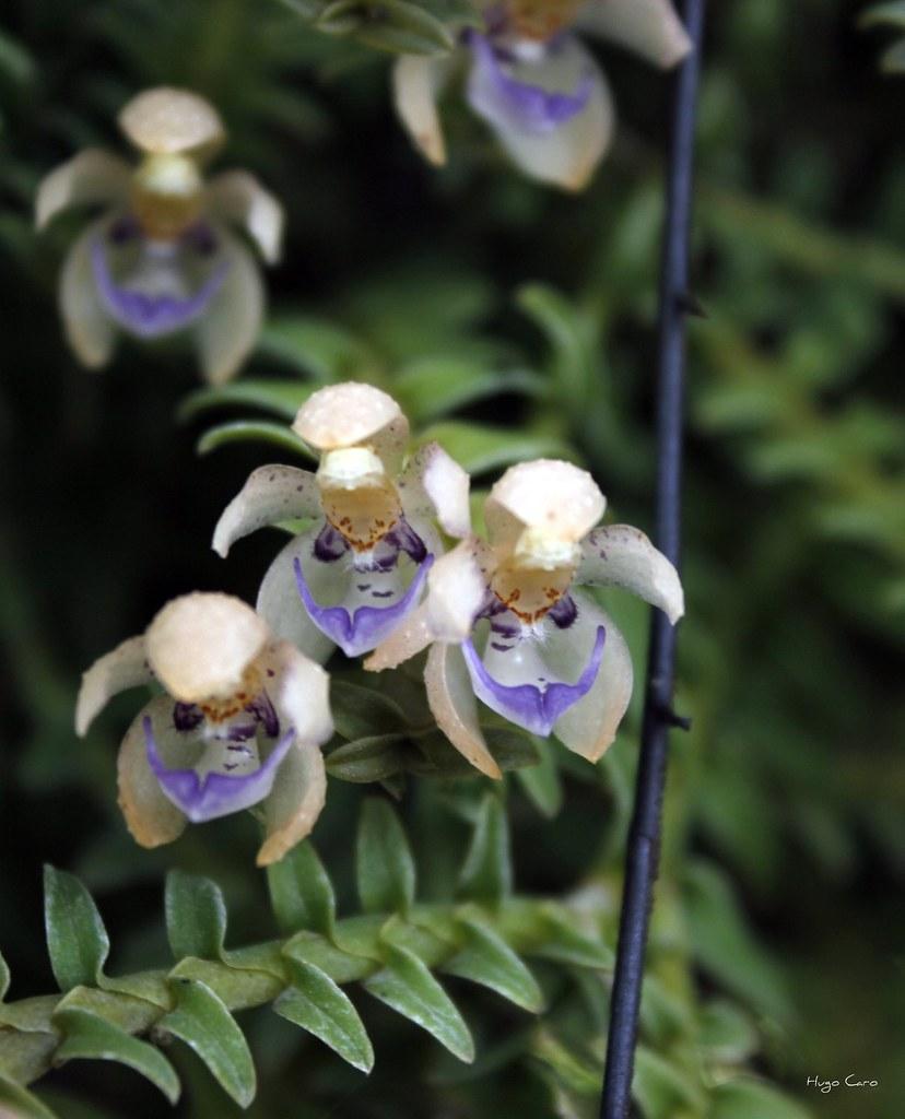Jardin botanico orqu deas moxviquil san cristobal de las for Jardines de orquideas