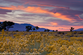 Owens Valley Sunrise | by Robin Black Photography
