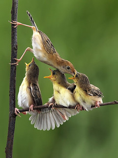 Giving Eat... | by Sijanto