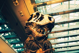 natural history museum dino hall | by meow alix