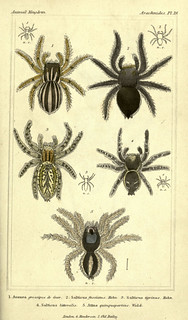 n378_w1150 | by BioDivLibrary