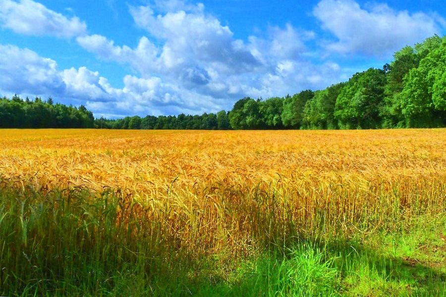 harvest field | Such healing colours in the fields. | Alex | Flickr