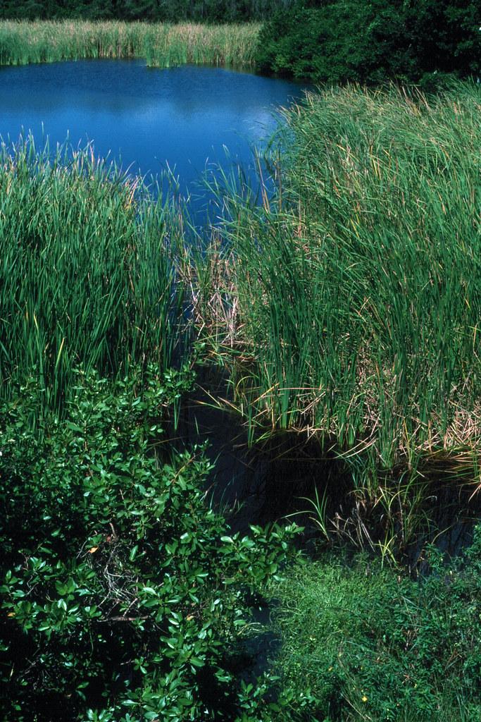 Everglades 1990 B07 Ec...
