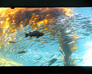 Monterey Bay Aquarium | by sgrace