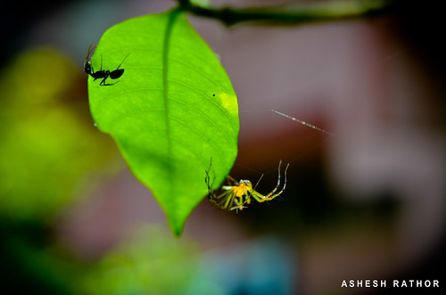 Hide and Seek | by asheshr