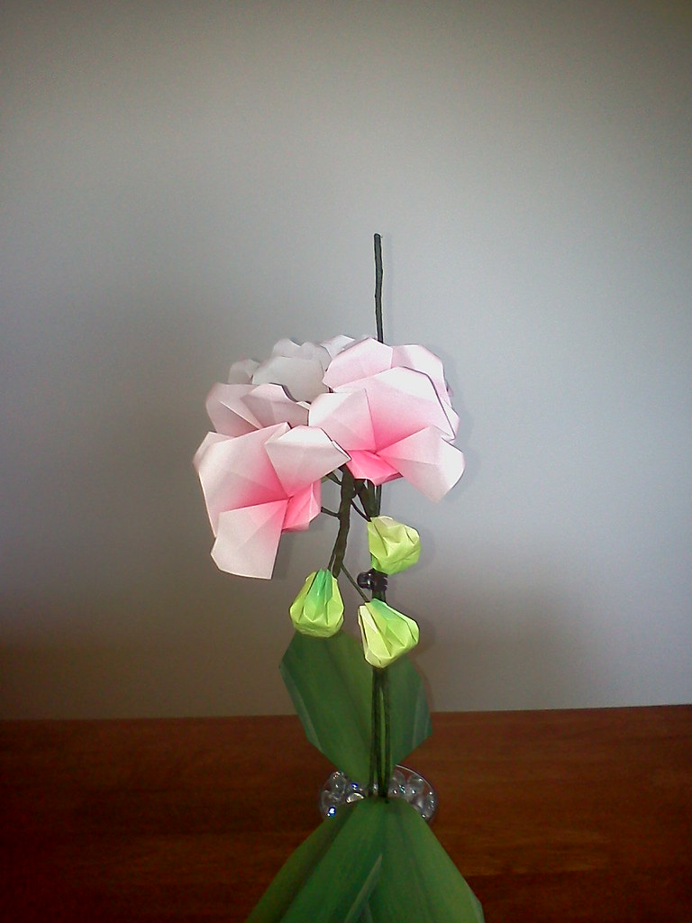 origami orchid check out my profile if you would like to