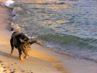 Eva, una maialina da spiaggia / Eva, a beach-pig | by simonetta manca (Always more busy! Sorry!)