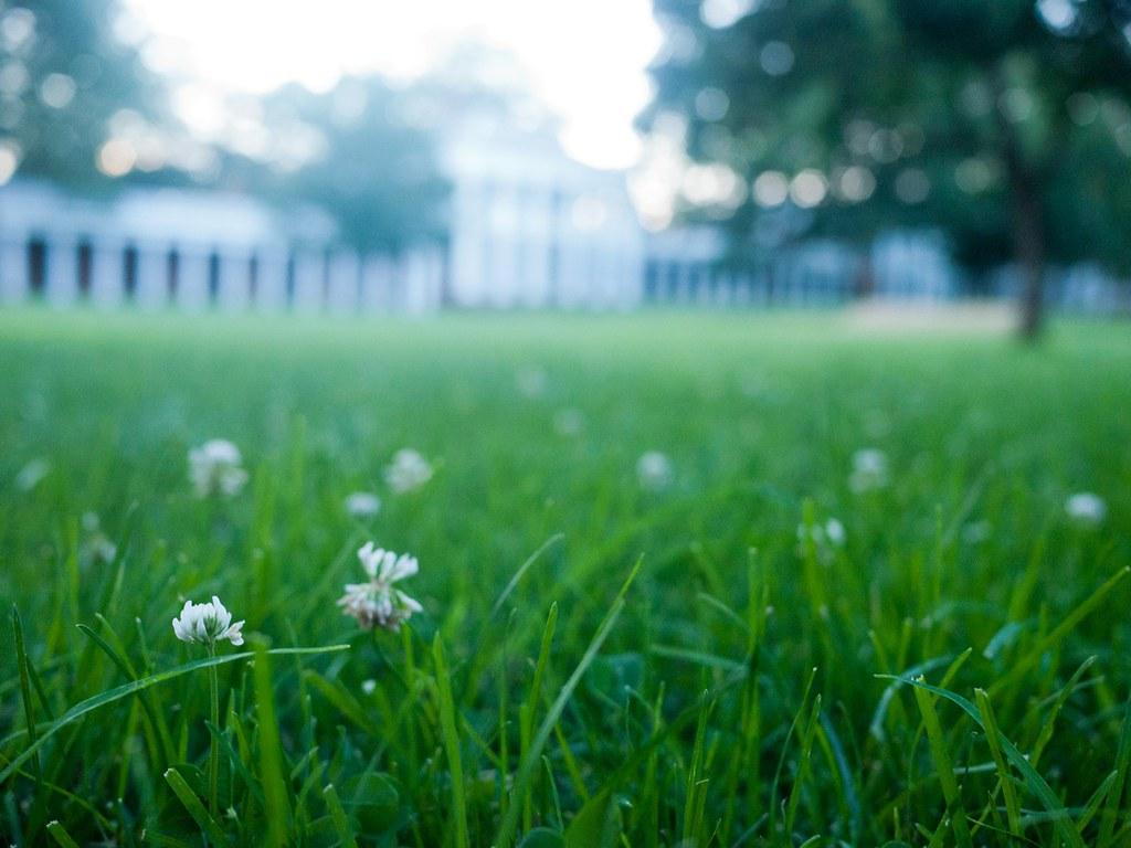 sydney lawn care