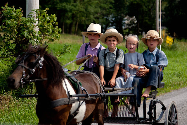 Amish Kids In Buggy Flickr Photo Sharing