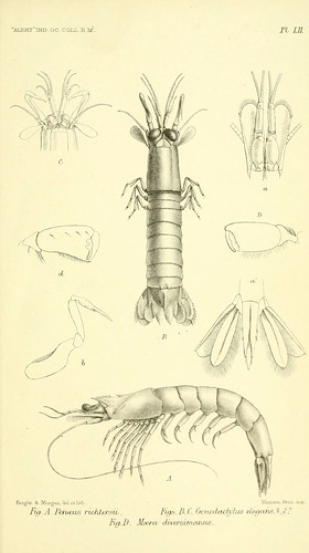 n832_w1150 | by BioDivLibrary